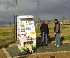 Aiutare gli animali randagi e l'ambiente grazie ai distributori automatici: adesso si può