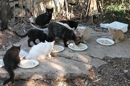 Dagli avanzi delle mense scolastiche il cibo per i gatti abbandonati